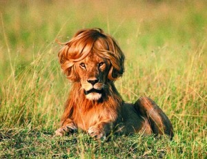lion fashion hair